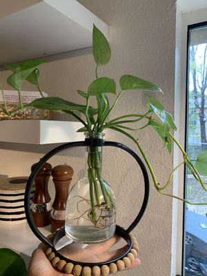 Real plant and stand for Sale in Lancaster, TX