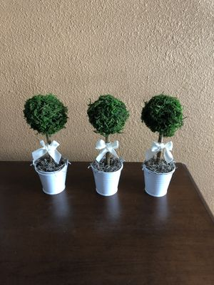 Set of 3 mini moss topiary for Sale in San Benito, TX