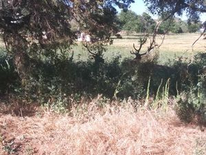Yard cleaning and trash removal for Sale in Payson, AZ