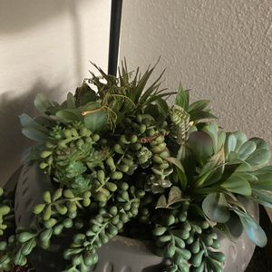 Fake Plant for Sale in Rancho Cucamonga, CA