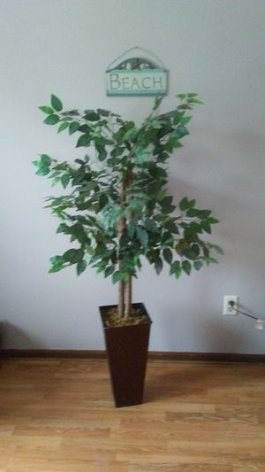 Silk Tree 5 ft for Sale in Fort Wayne, IN