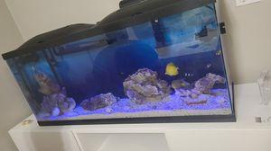 Aquarium ready to use 55 gallon with white stand !!! for Sale in Miami Gardens, FL