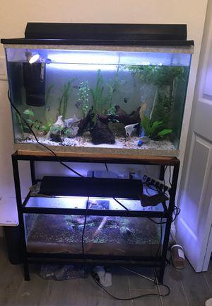 Double aquarium setup complete for Sale in West Palm Beach, FL