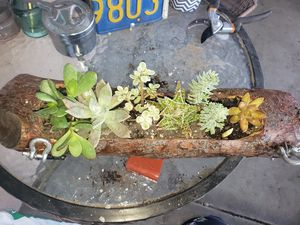 Succulents for Sale in Jurupa Valley, CA