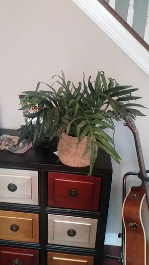 Fake plant for Sale in Ocoee, FL