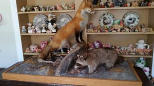 Taxidermy FOX AND RACCOON for Sale in Lakeland, FL