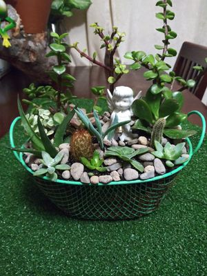 Succulents en canasta pequeña for Sale in Bell, CA