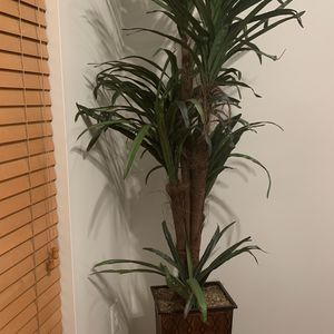Artificial Plant for Sale in Odenton, MD