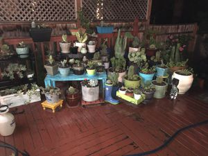 Succulents and cactuses for Sale in Oregon City, OR