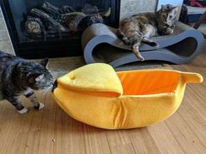 Banana Bed for Cat or Dog for Sale in Portland, OR