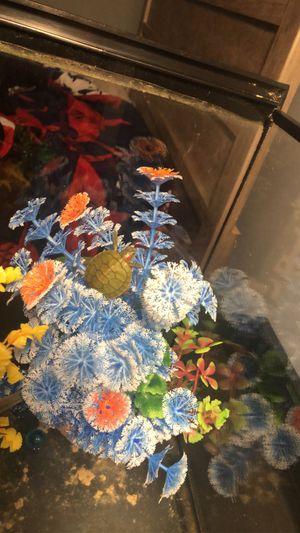 Slider turtle for Sale in Lawrenceville, GA