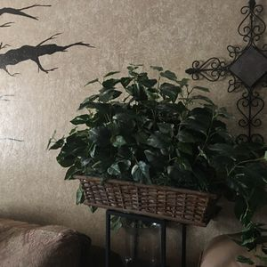 Fake Big Plant (firm Price ) for Sale in Phoenix, AZ