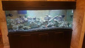 135 gal fish tank for Sale in Beverly Hills, CA
