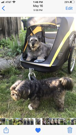 Dog Stroller for Large Dogs for Sale in Queens,  NY