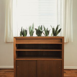 Mid century indoor planter shelf w/snake plants for Sale in Lake Stevens, WA