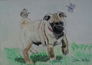 Pug puppy and butterflies for Sale in US