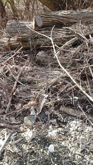 Firewood cut last year for Sale in Cincinnati, OH