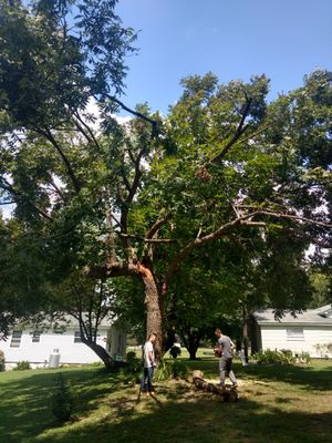 Pecan tree FREE for wood for Sale in Apex, NC