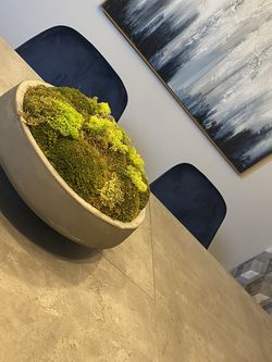Moss in Stone Bowl for Sale in Boyds,  MD