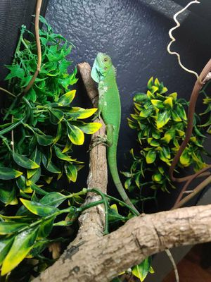 Iguana reptile Cage for Sale in Los Angeles, CA