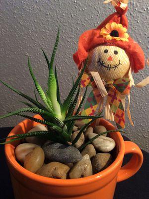 "10"" Cute Succulent Live Plant Orange Cup for Sale in Austin, TX"