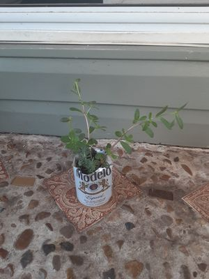 Succulents for Sale in Hurst, TX