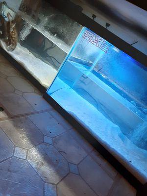 10 gallon fish tank (2 for a 20L trade) for Sale in Philadelphia, PA