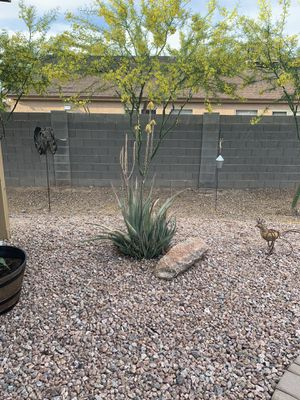 Free Aloe for Sale in Fort McDowell, AZ