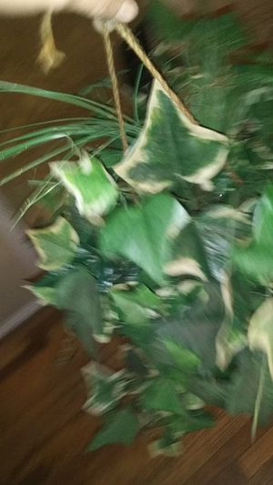 Fake plant for Sale in Thornton, CO