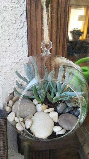 Terrarium for Sale in Henderson, NV