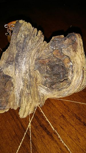 Petrified wood with walnut. Left by squirrel for Sale in Fairfield, IA