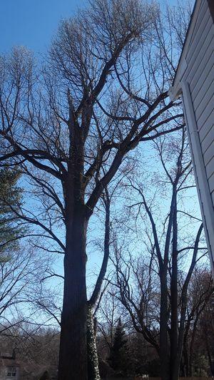 Cut trees for Sale in Adelphi, MD