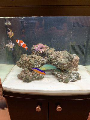Salt water aquarium for Sale in Boston, MA