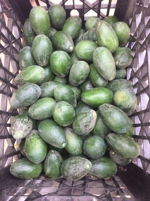 Avocado for Sale in Cutler, CA