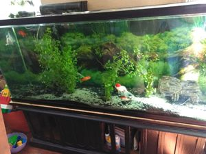 Fishtank for Sale in Clovis, CA