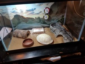 Leopard gecko with complete habitat for Sale in Rochester, MN
