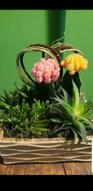Cactus arrangements for Sale in Clinton, MD