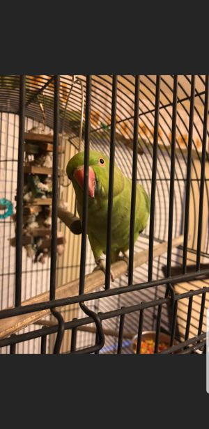 Parrot with Cage for Sale in Nashville, TN