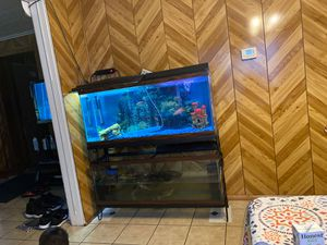 Fish tanks for Sale in Chicago, IL