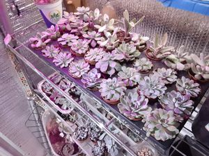 Succulents!!!! pre made and handcrafted planter boxes. for Sale in Fort Worth, TX