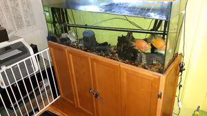 55 gallon Fish tank for Sale in New Britain, CT
