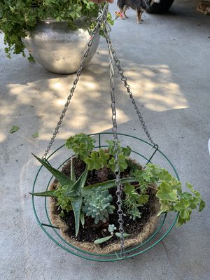 Hanging plant for Sale in Fresno, CA