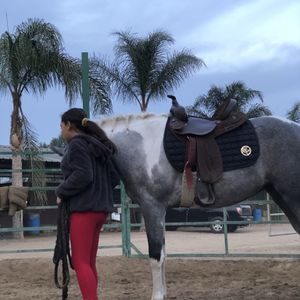 Horse Saddle for Sale in Chino, CA