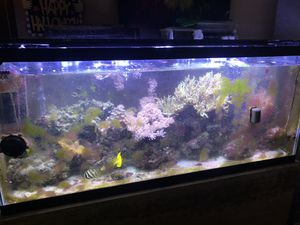55 Gallon saltwater tank for Sale in Brooklyn, OH