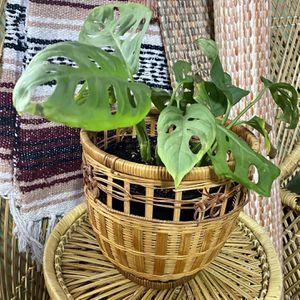 Vintage Boho Wicker Rattan Plant Basket w/ Live Plant for Sale in Glendale, AZ