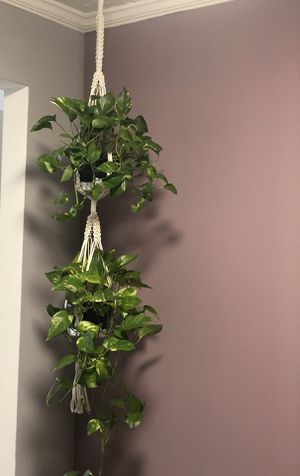 Double plant hanger (READ DESCRIPTION CAREFULLY) for Sale in Duluth, GA