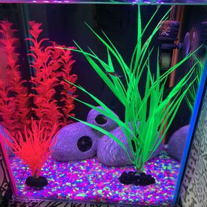 Fish tank 8 Gallons for Sale in Santa Fe Springs, CA