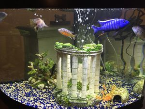 55 Gallon Tank with Everything for Full Set Up for Sale in Knoxville, TN