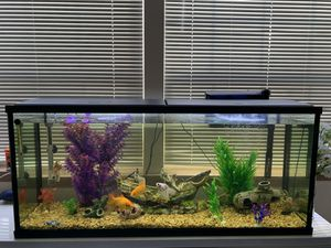 55 Gallon Fish Tank/ Aquarium for Sale in Auburn, WA