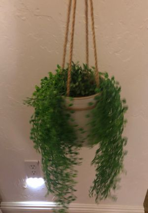 Money Tree & Air Plants for Sale in San Diego, CA
